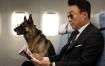 【 赛高 影评 】《 好狗特攻队 》另一部南韩「动物奇片」